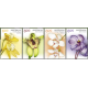Australia: Native Orchids Gummed Strip of Stamps